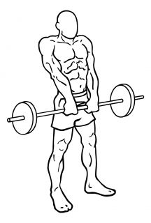 Barbell shrugs small frame 2