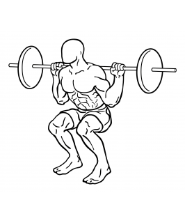 Barbell squat small frame 2