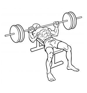 Bench press small frame 1