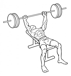 Bench press small frame 2