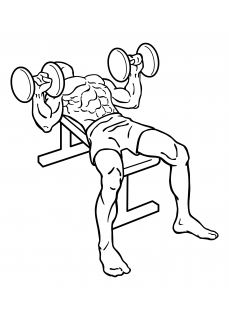 Bench press dumbbell small frame 2