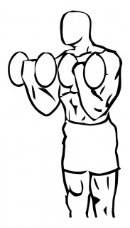 Biceps curl squat with dumbbell small frame 1