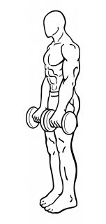 Dumbbell dead lifts small frame 2