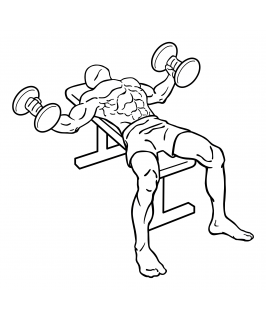 Dumbbell flys small frame 2