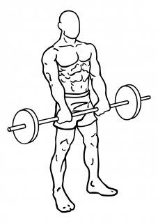 Front barbell raises small frame 2