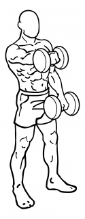 Front dumbbell raise small frame 2