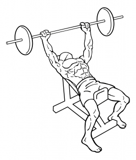 Incline bench press small frame 2
