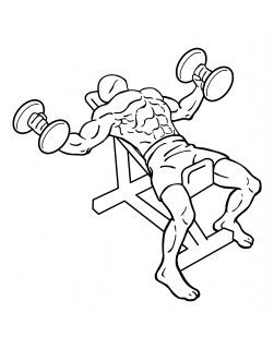 Incline dumbbell flys small frame 2