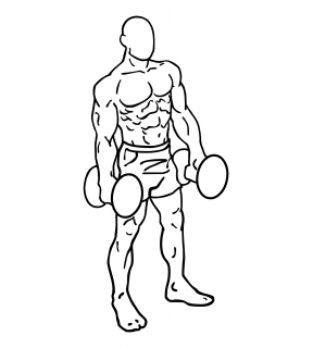 Lateral dumbbell raises small frame 2