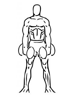 Lateral lunge with bicep curl with dumbbell small frame 1