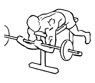 Lying high bench biceps curl with barbell small frame 2