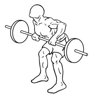 Rear deltoid row barbell small frame 2