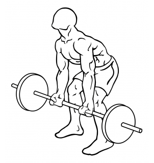 Reverse grips bent over barbell rows small frame 1