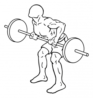 Reverse grips bent over barbell rows small frame 2