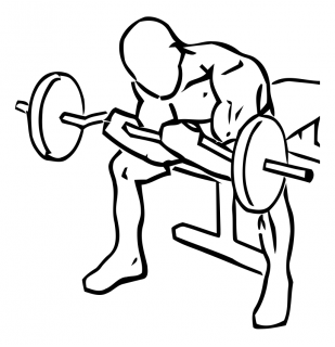 Seated close grip concentration curls with barbell small frame 2