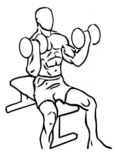Seated inner biceps curl with dumbbell small frame 2
