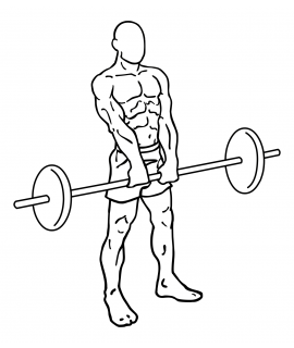 Upright barbell rows small frame 2